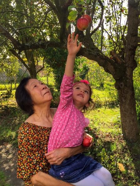 Kara picking apples