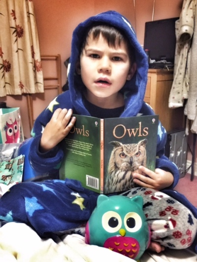 toby-owls